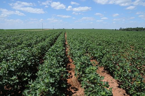 6,900 Acre Land Auction Offered in 15 Tracts - 3,800 Acres