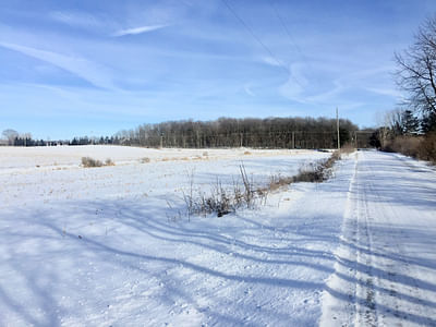 Farmland Auction Absolute Land Auction 40 Acres